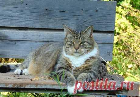 """Познакомимся с """"кошачьим словарем""""...."""