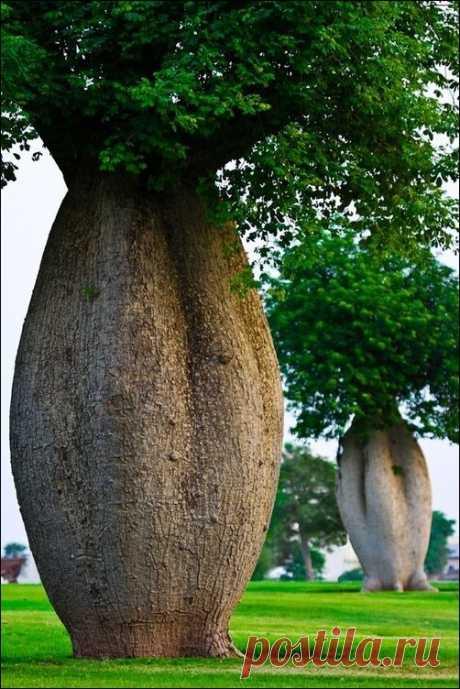 разные деревья фото | Фотоархив