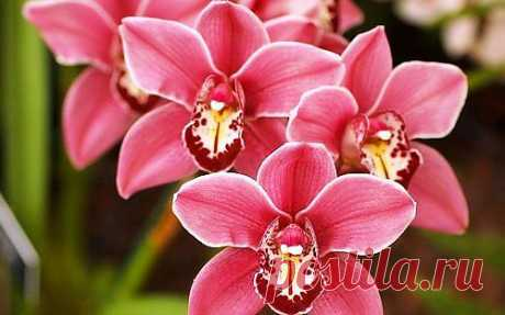 Как правильно ухаживать за комнатными растениями. Как заставить цвести орхидею