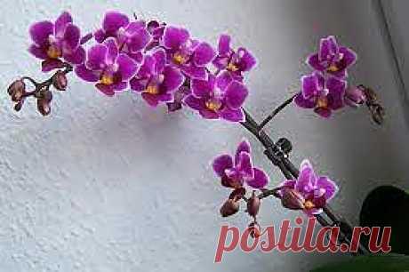 Орхидеи |