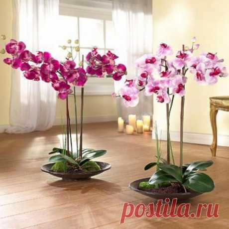 Содержание орхидей зимой: 14 полезных советов — Садоводка