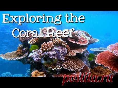 Планета, которую мы теряем: коралловые рифы могут исчезнуть к 2100 году