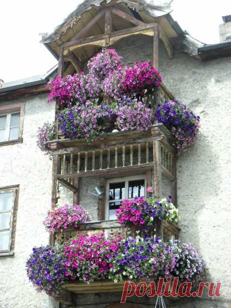 Лучшие цветы для балкона и лоджии: что купить, а что посеять - Postel-Deluxe.ru