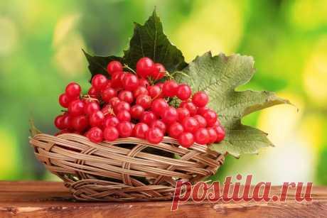 Калина – одна из самых ПОЛЕЗНЫХ ягод в природе | 6 соток