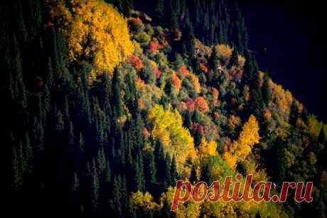 Осень в Заилийском Алатау, Казахстан. Автор фото — Григорий Беденко: