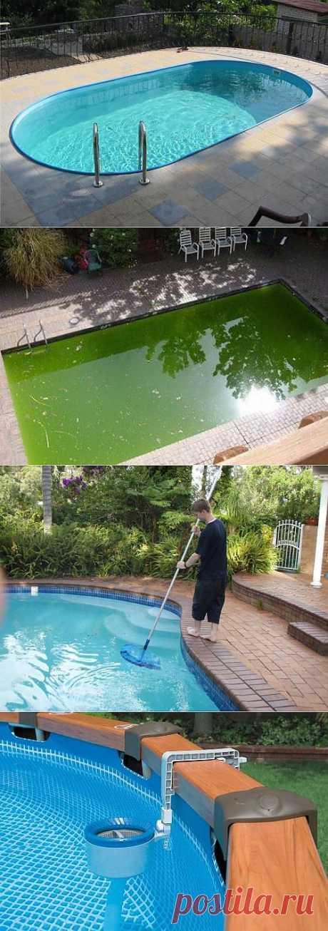 Как очистить бассейн или водоем от цветущей воды или механических загрязнений