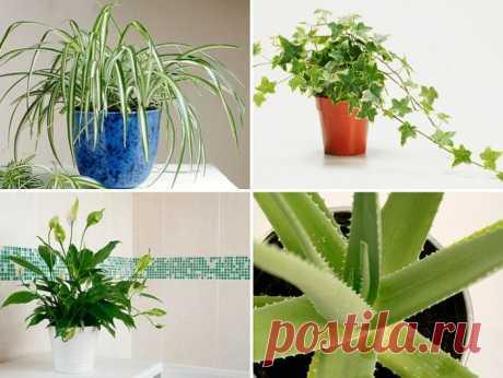 Лечебные комнатные растения с фото и названиями, 10 лучших