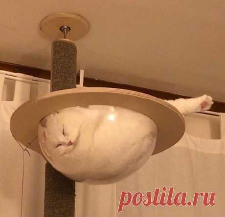 10 фотографий кошек, покоривших Интернет