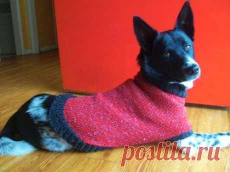 Идеальная схема вязания одежды для собак спицами   vjazem.ru