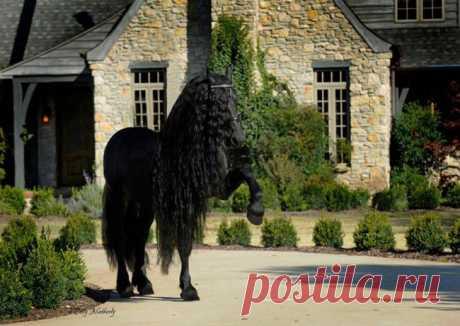 Красивейший конь в мире Фридрих Великий