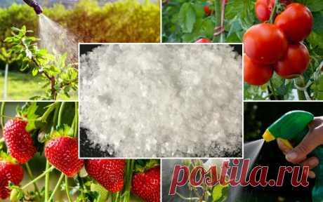 Применение борной кислоты в саду и огороде. — Садоводка