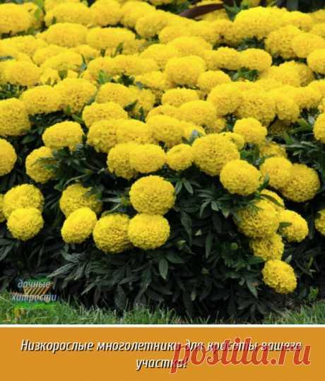 Я хочу рассказать вам про чудесные многолетние цветы, которые станут отличным декоративным элементом в саду. | OK.RU