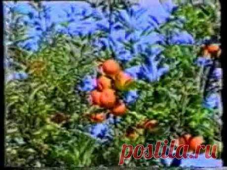 ▶ Галина Шаталова- Система естественного оздоровления - YouTube