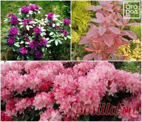 11 красивых цветов для тени и полутени | Цветники и клумбы (Огород.ru)