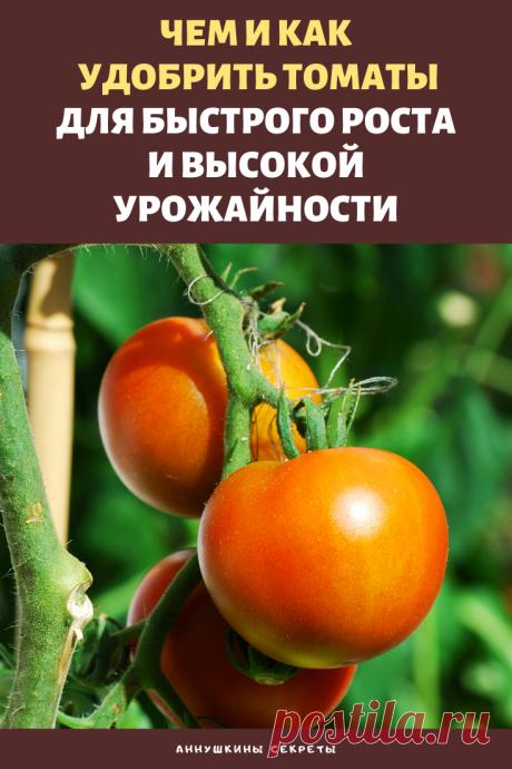 При появлении зеленых помидоров на кустах томатов следует позаботиться о том, чтобы урожай был высоким, а плоды обладали хорошими вкусовыми и товарными качествами. Достичь такого результата можно правильным внесением удобрений в период плодоношения культуры.