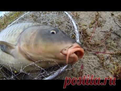 Рекордная рыбалка на снасть убийца карася(соска)