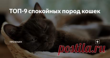 ТОП-9 спокойных пород кошек Активные, дружелюбные, капризные - вот лишь несколько слов, которыми можно описать характер кошек. Мы, люди, тоже разные, даже к выбору кошки относимся по-разному: одни, как я, не выбирают питомца, другим важны определенные качества, по которым будущий хозяин выбирает породу. Многим важно, чтобы питомец был спокойным и дружелюбным, особенно, если дома маленький ребенок. Существует множество пород, которые известны своим спокойным нравом, о них п...