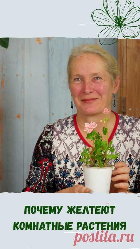 Дача 🏡 Сад 🌳 Огород 🍆 Цветник🌷 в Instagram: «Комнатные растения нуждаются в нашем внимании круглый год. А на неправильный уход или его отсутствие реагируют увяданием, пожелтением…»