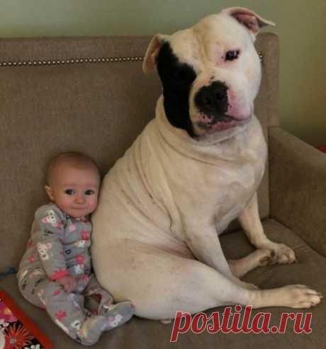 20 трогательных фотографий о безусловной любви домашних животных