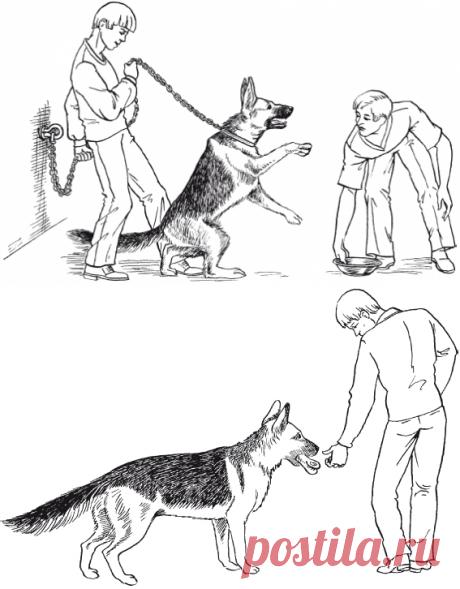 Коррекция нежелательного агрессивного поведения / Перевоспитание собак