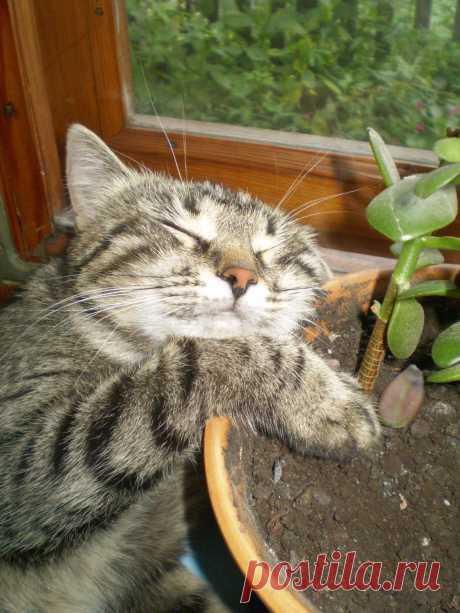 в вазоне поспать - милое дело!