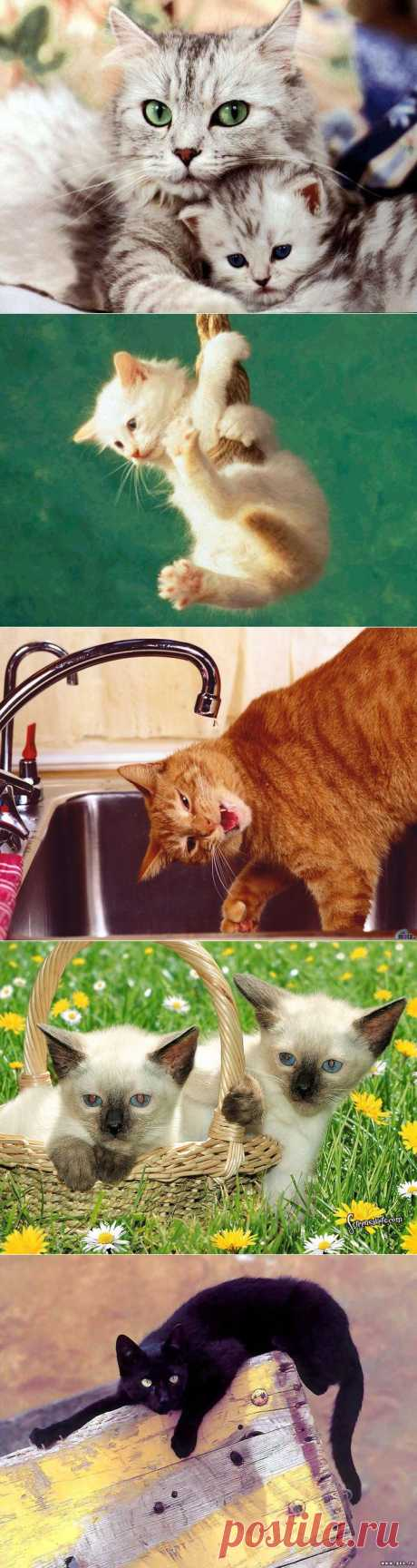 Кошак - хозяин и вожак!.