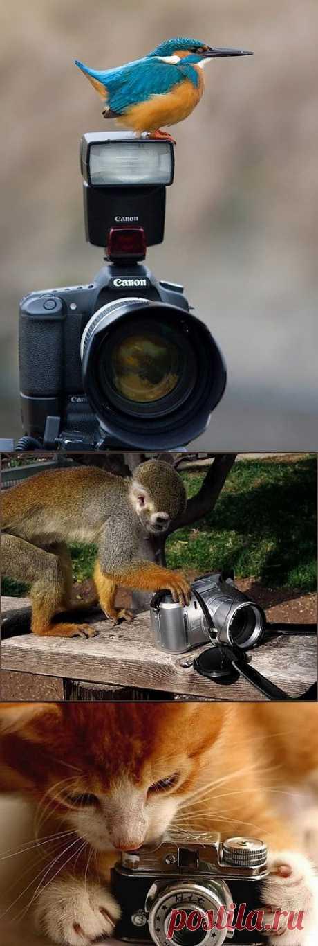 У животных появилась новая профессия - папарацци.