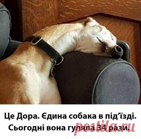 Ужесточение карантина - собаку для прогулки можно взять в аренду