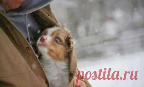 Боже, помоги мне быть таким человеком, каким меня считает моя собака Собака — это единственное существо на земле, которое любит тебя больше, чем себя. Нет создания вернее и надежнее. Кто еще будет нестись со всех ног к тебе, светясь от счастья, виляя хвостом, беззаветн...