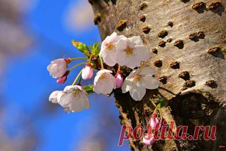 Как реанимировать старое и больное дерево: 8 советов садоводам