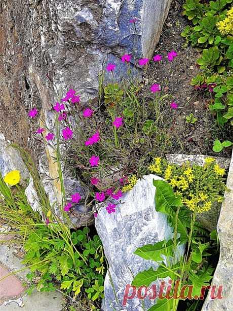 Las flores y las piedras