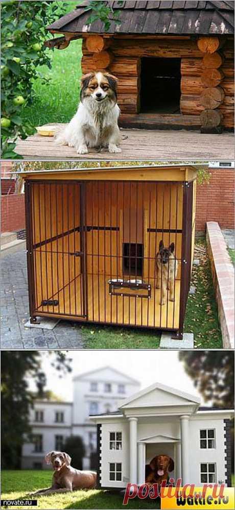 Где на даче поселить собаку? Какие оригинальные дома для питомцев можно оборудовать у себя на даче.