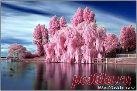 Цветущий весенний рай в Китае