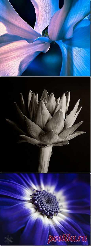 Макромир цветов от Dawn LeBlanc.