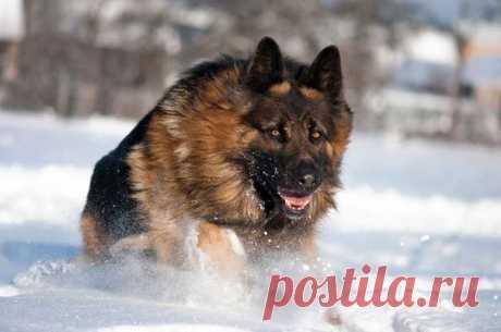 Хозяин использовал собаку для грабежа  Пьяный мужчина, выгуливая пса, ограбил прохожего.   https://www.smolensk2.ru/story.php?id=75607&_k=y..