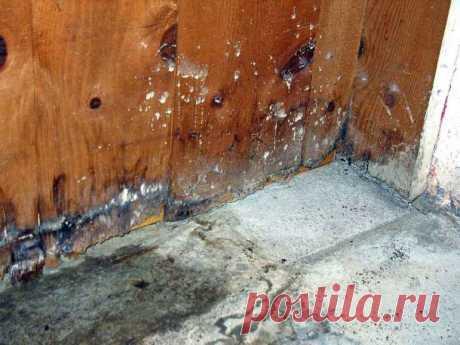 Как плесень влияет на качество ремонта и почему это опасный сосед — Строительство и отделка — полезные советы от специалистов