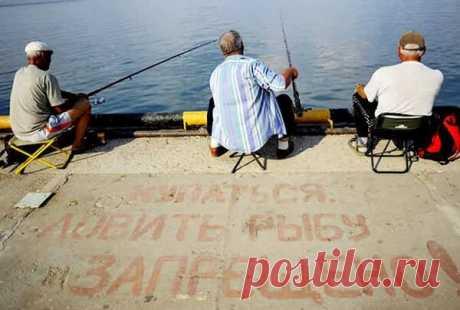 Четыре закона рыбалки, которые должны знать все рыбаки | Блоги о даче и огороде, рецептах, красоте и правильном питании, рыбалке, ремонте и интерьере
