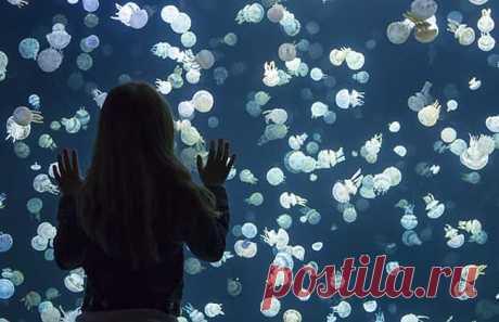 Удивительные фотографии медуз в Аквариуме Ванкувера - BADBEE.RU
