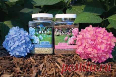 Que sobrealimentar la hortensia en primavera para el florecimiento pomposo en el jardín