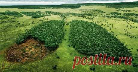 20 лет назад Земля перестала зеленеть: исследование | Наука и технологии