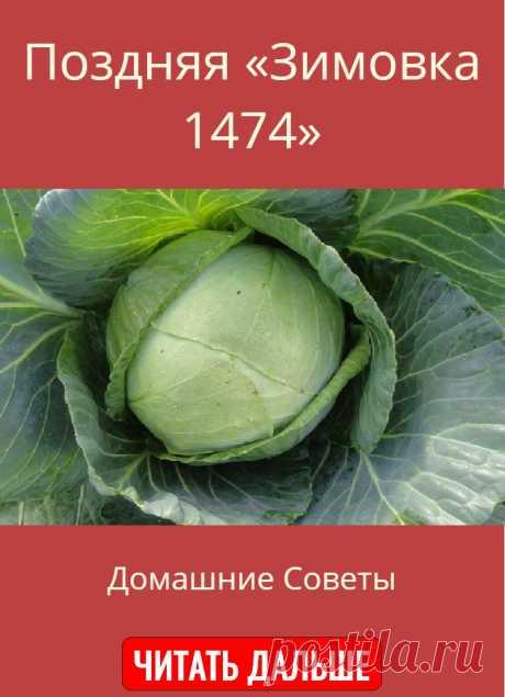 Поздняя «Зимовка 1474»