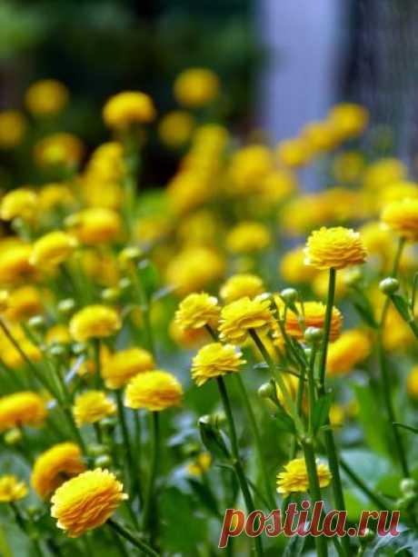 Полевые цветы и другие дикорастущие.. Просто фото, просто для души. - Страница 31 - Растения Страница 31 из 31 - Полевые цветы и другие дикорастущие.. Просто фото, просто для души. - отправлено в Растения: