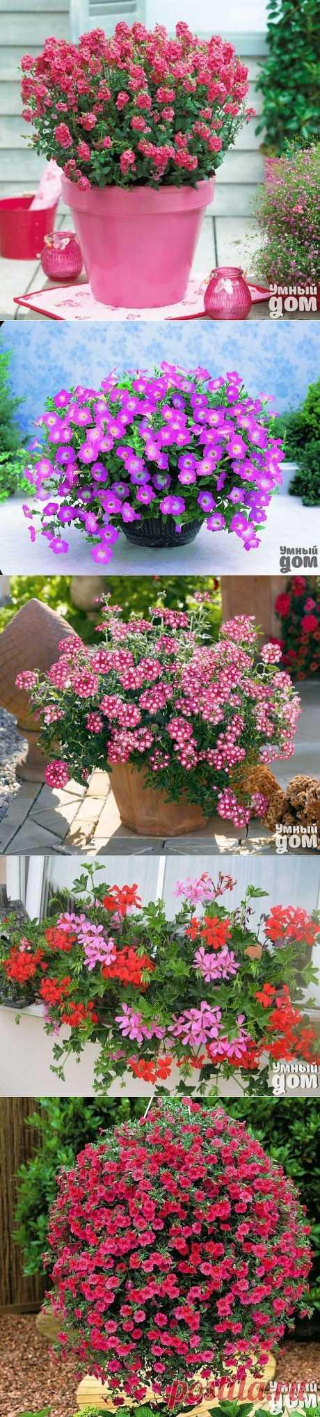 Ампельные растения в Вашем саду!