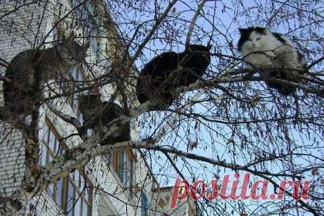 Март!!!               До весны осталось совсем чуть-чуть — уже коты прилетели