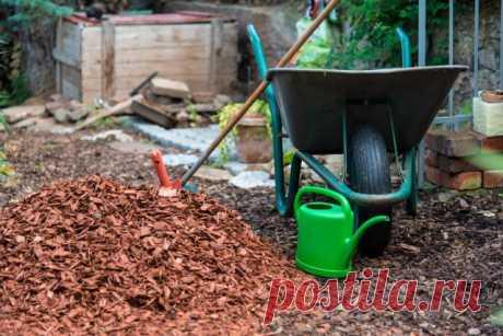 Чем и как мульчировать растения осенью? Фото — Ботаничка.ru