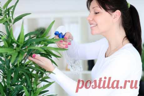 ¡Las plantas para la felicidad y el amor en la casa!
