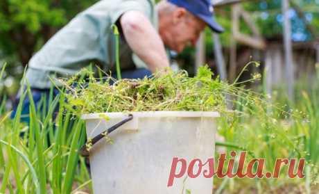 Гид по сорнякам: фото, виды, названия, меры борьбы | Почва и плодородие (Огород.ru)