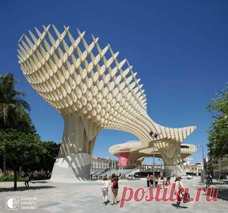 Самая большая деревянная структура мира Метрополь Парасол  деревянная структура, расположенная на Ла Энкарнасион-Сквер, в старом квартале Севильи, Испания. Разработанная немецким архитектором Юргеном Майером-Германом, структура напоминает рощу больших деревьев высотой до 26 метров. Структура Metropol Parasol имеет размер в 150 на…