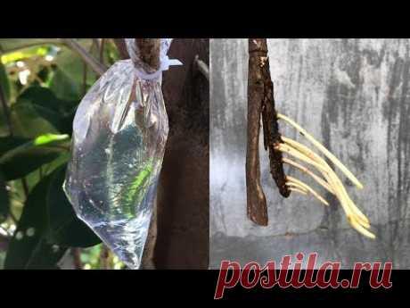 Как извлечь растениям из воды очень много корней