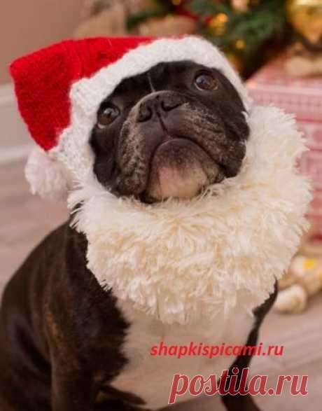 СантаДог - новогодняя вязаная шапочка для собаки. С описанием вязания для 4-х размеров.